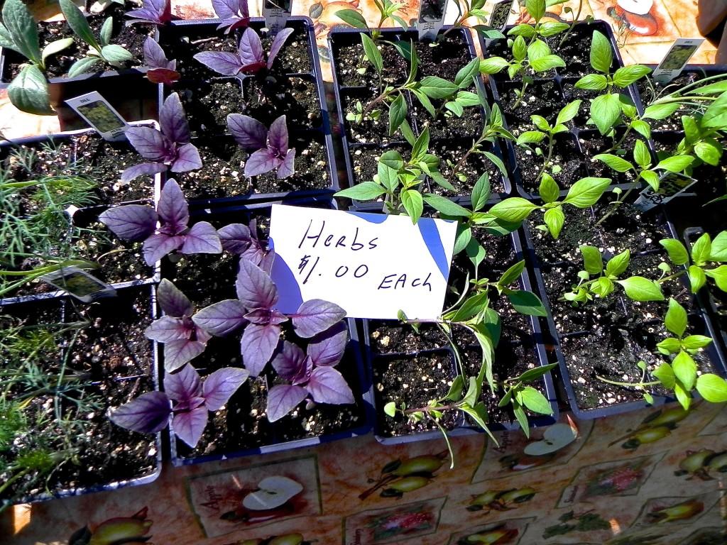 herb seedlings from Virginia's Heath Farm at Byrd House Renegade Market