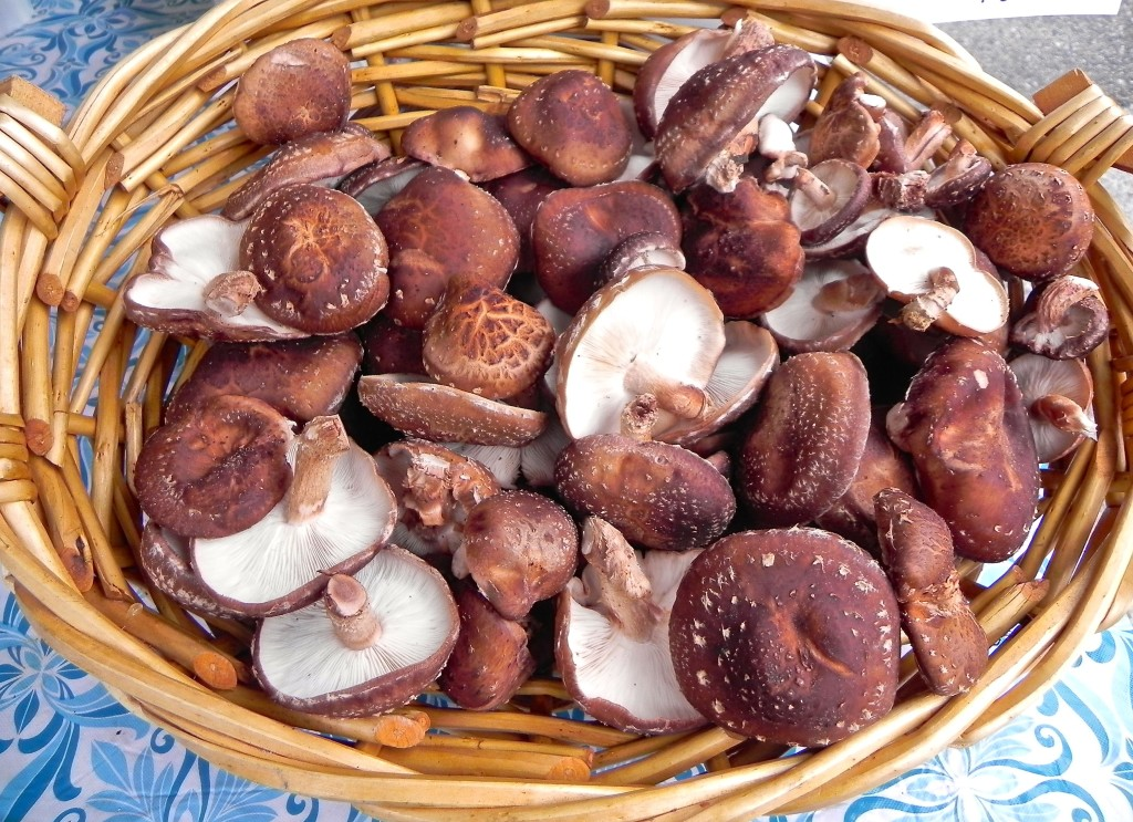 shiitake mushrooms from Pine Fork Farm in Quinton, VA