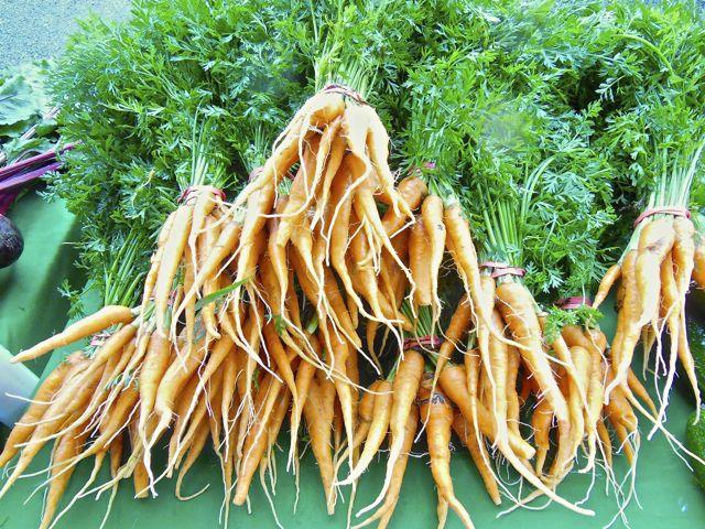 baby carrots from walnut hill farm at the lakeside farmer's market